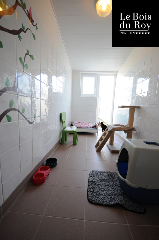 chambre avec cour pension pour chats le bois du roy. Black Bedroom Furniture Sets. Home Design Ideas
