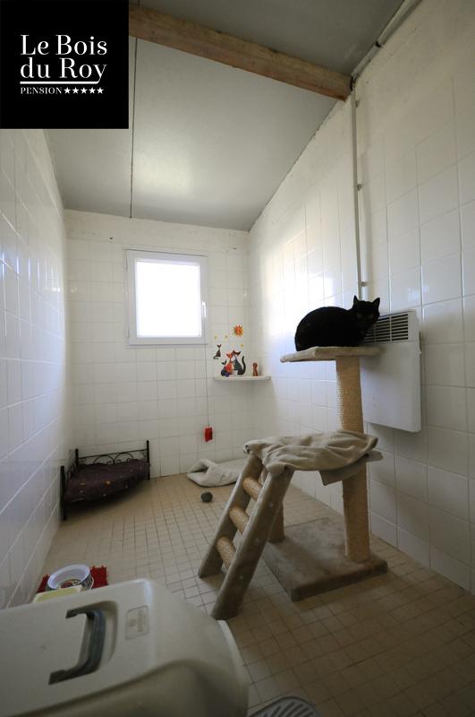 chambre avec fen tre pension pour chats le bois du roy. Black Bedroom Furniture Sets. Home Design Ideas