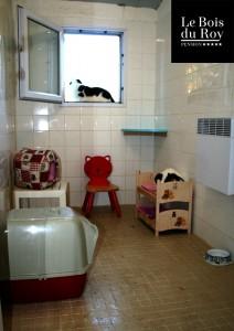 Chambre avec fenêtre avec un chat qui bronze sur le rebord de sa fenêtre