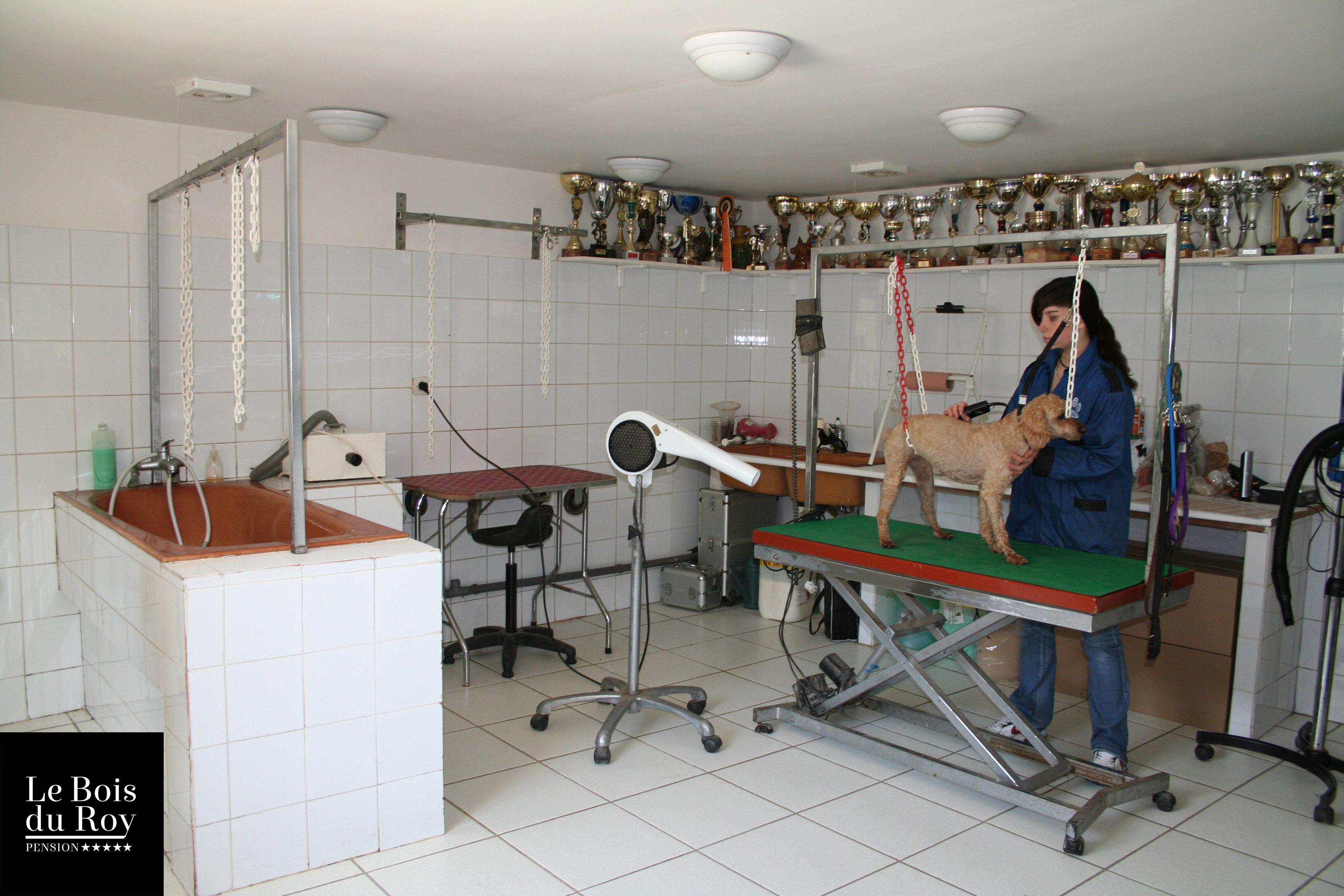 Salon de toilettage prix attractif le bois du roy for Salon toilettage