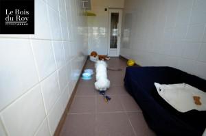 Chambre avec cour avec un bichon jouant dans sa partie intérieure.