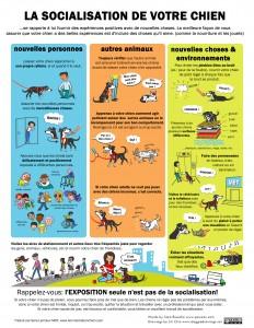 Image Doggie Drawings expliquant les bases d'une bonne socialisation