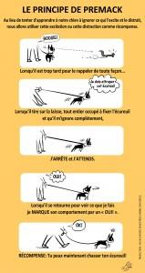 Image Doggie Drawings illustrant le principe de Premack avec le chien qui tire en laisse et comment le faire arrêter de tirer