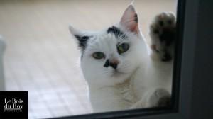 Pitoue, une petite chatte qui a ses pattes contre la vitre de la porte de sa Chambre avec Fenêtre