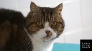 Pussy, un chat très observateur dans sa Chambre avec Fenêtre