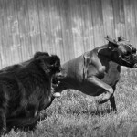 Fenix et Pumba - Le Bois du Roy