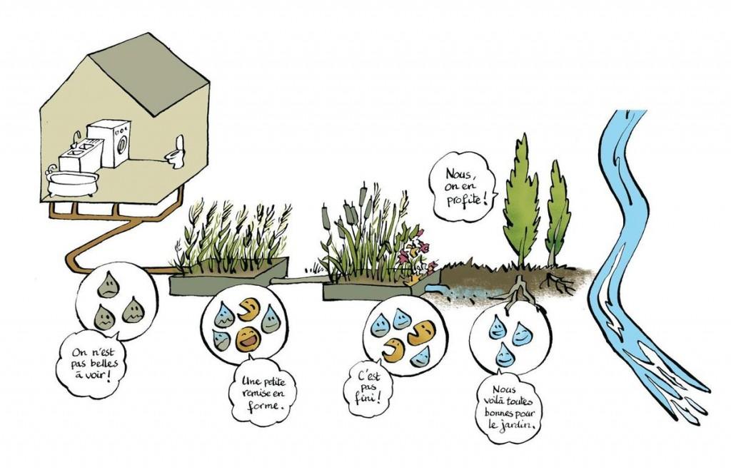 Schéma du système de phytoépuration - Aquatiris - Le Bois du Roy