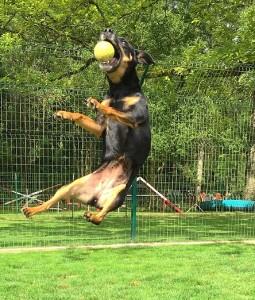 jeu de balle d'un chien en pension